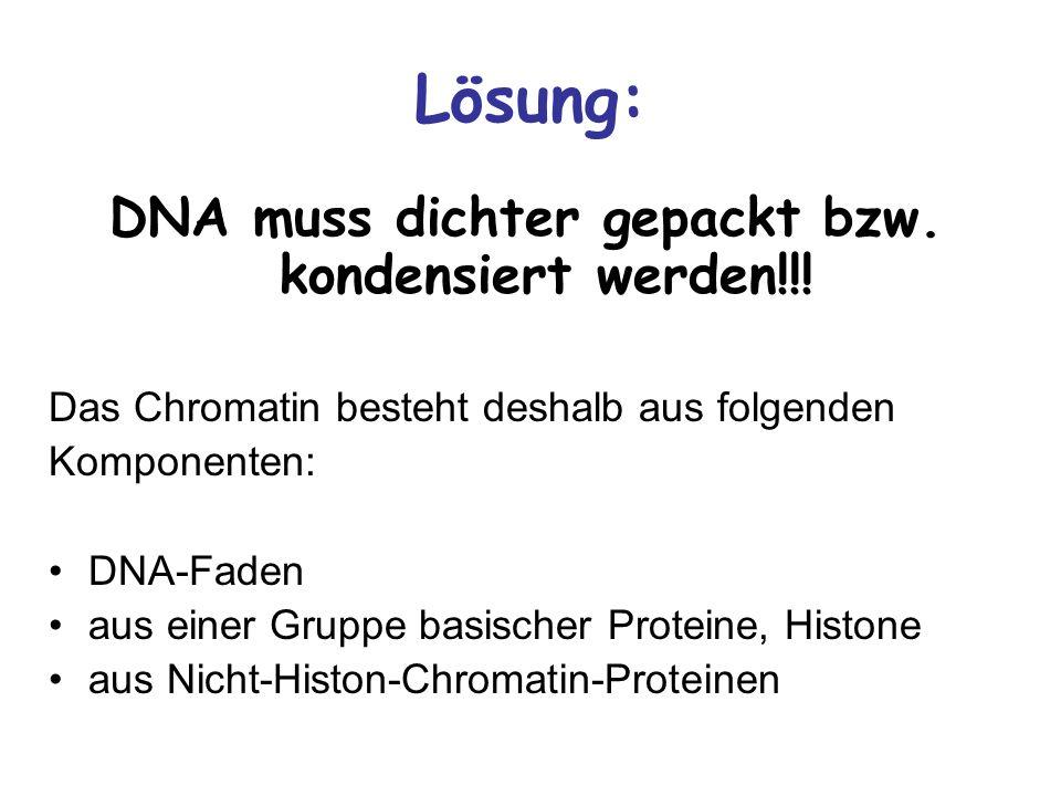 Lösung: DNA muss dichter gepackt bzw. kondensiert werden!!! Das Chromatin besteht deshalb aus folgenden Komponenten: DNA-Faden aus einer Gruppe basisc