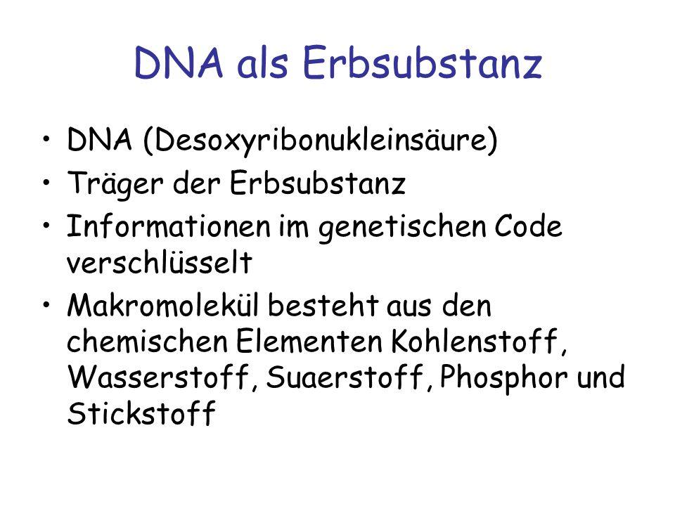 DNA als Erbsubstanz DNA (Desoxyribonukleinsäure) Träger der Erbsubstanz Informationen im genetischen Code verschlüsselt Makromolekül besteht aus den c