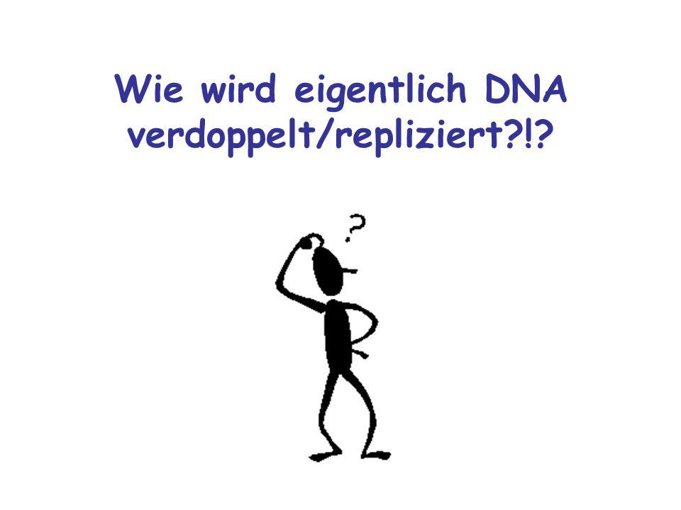 Wie wird eigentlich DNA verdoppelt/repliziert?!?