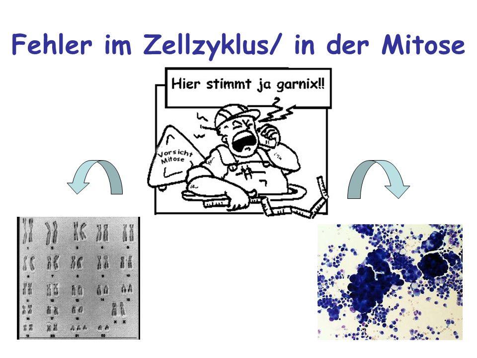 Fehler im Zellzyklus/ in der Mitose