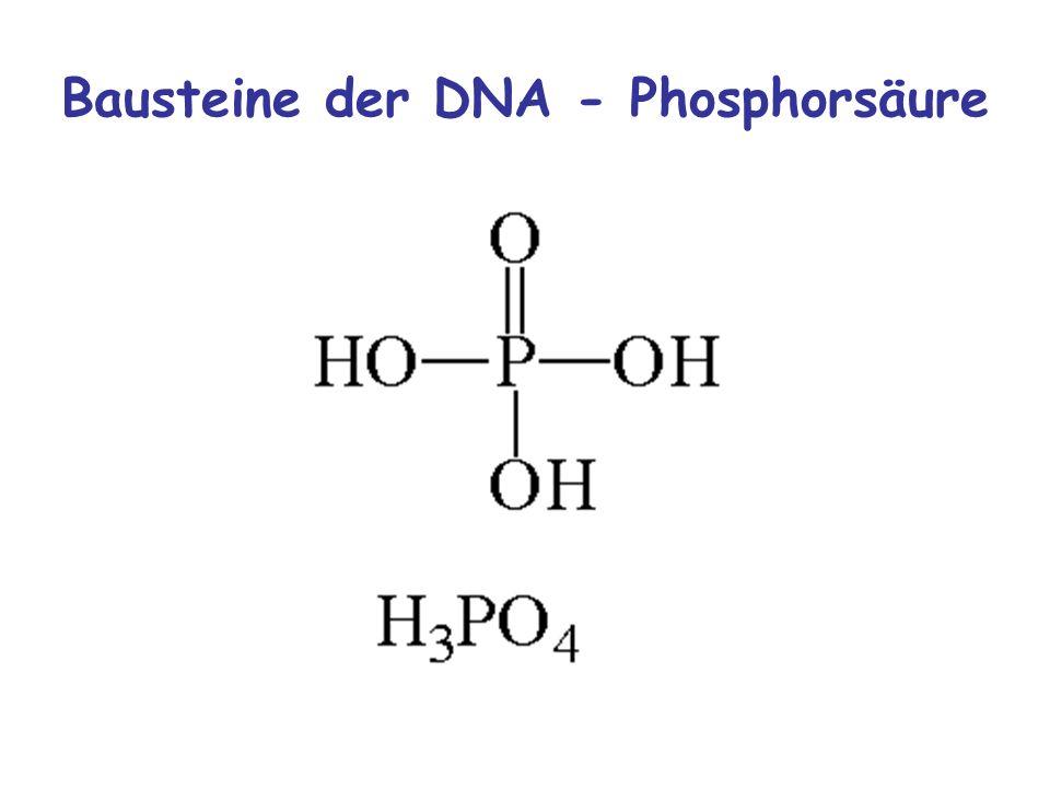 Bausteine der DNA - Phosphorsäure