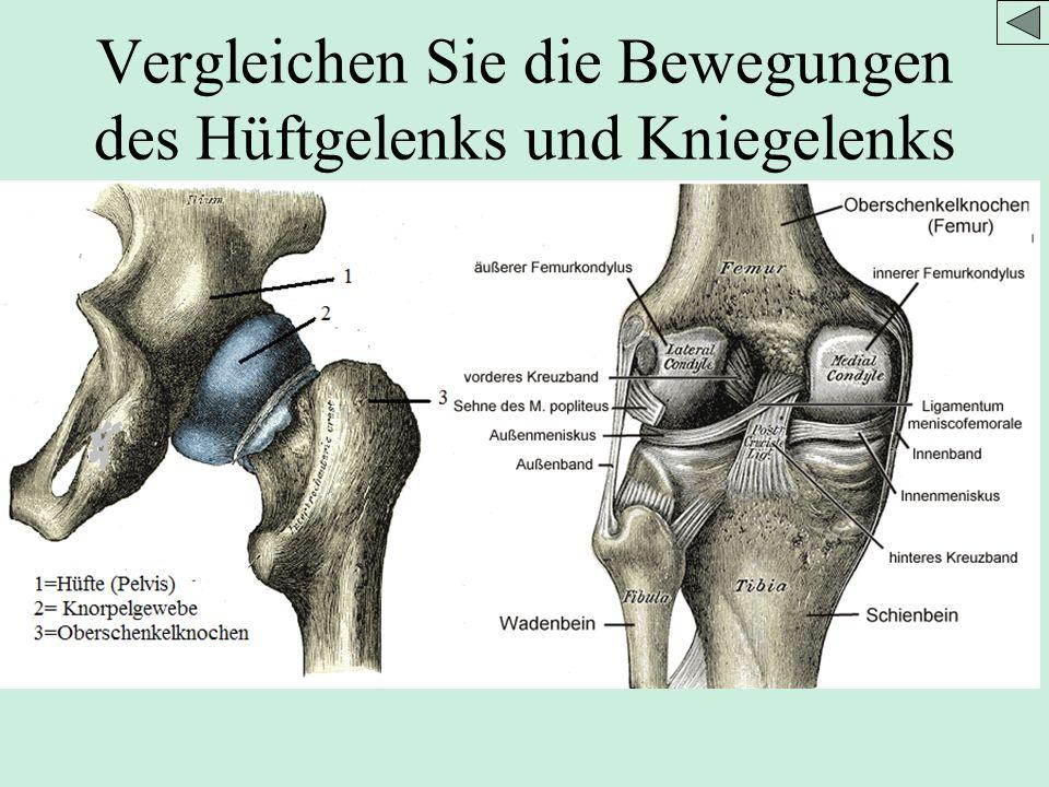 Großartig Muskeln Des Kniegelenks Bilder - Anatomie Ideen - finotti.info