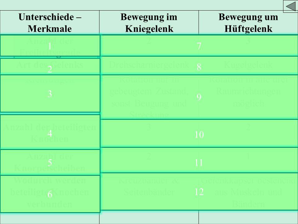 Unterschiede – Merkmale Bewegung im Kniegelenk Bewegung um Hüftgelenk Anzahl der Freiheitsgrade 23 Art des GelenksDrehscharniergelenkKugelgelenk RichtungenRotation nur in gebeugtem Zustand, sonst Beugung und Streckung Rotation in alle drei Raumrichtungen möglich Anzahl der beteiligten Knochen 32 Anzahl der Knorpelscheiben 21 Wodurch werden beteiligte Knochen verbunden Kreuzbänder & Seitenbänder Gelenkkapsel bestehend aus Muskeln und Bändern 7 8 9 10 11 12 2 3 4 5 6 1