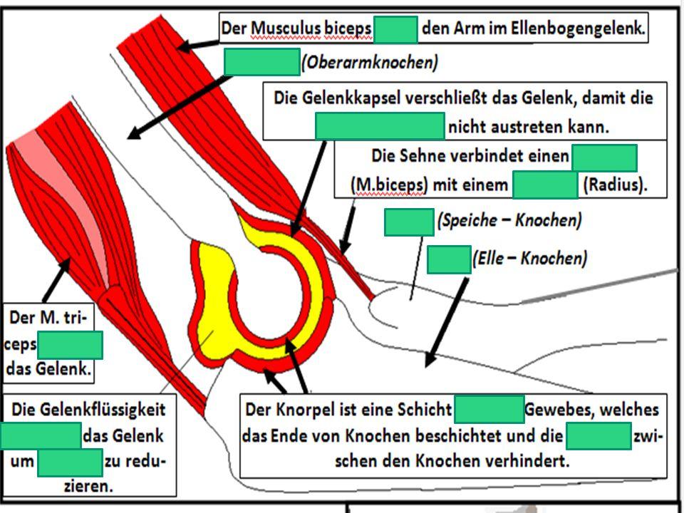 Vergleichen Sie die Bewegungen des Hüftgelenks und Kniegelenks