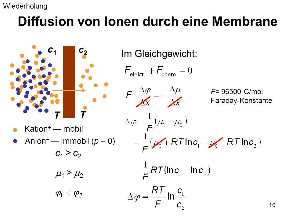 10 Diffusion von Ionen durch eine Membrane Im Gleichgewicht: c1c1 c2c2 c 1 > c 2 Kation + mobil Anion immobil (p = 0) 1 > 2 T T F= 96500 C/mol Faraday
