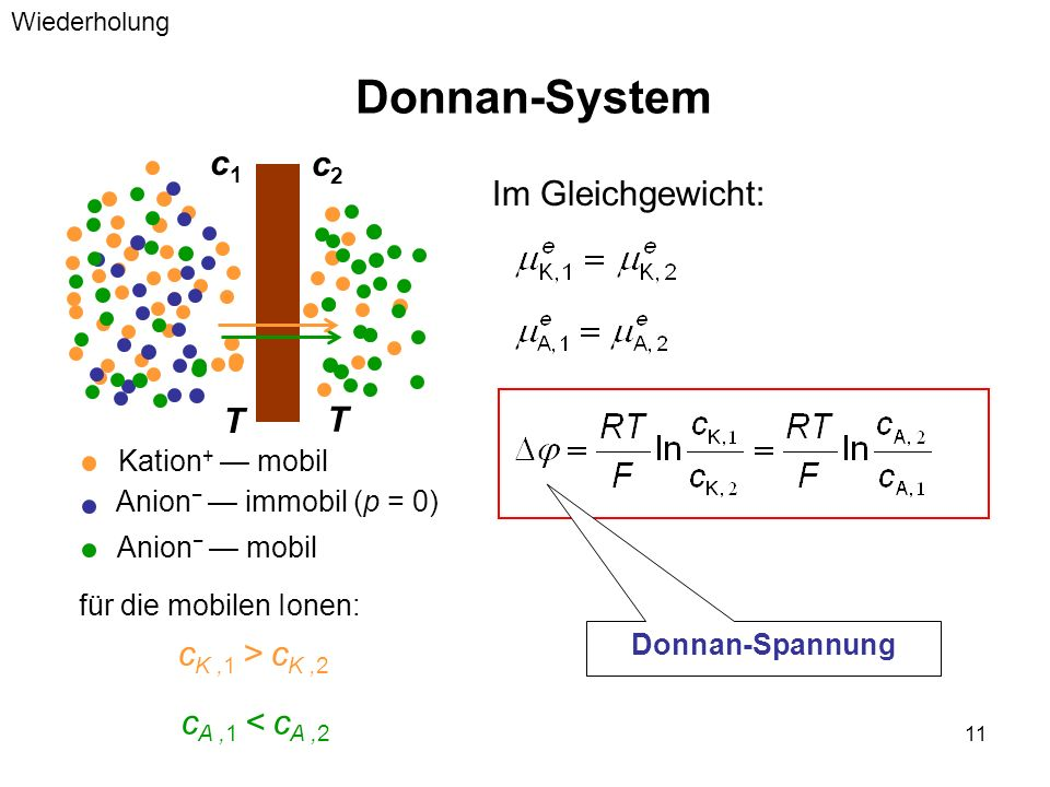 11 Donnan-System Im Gleichgewicht: c1c1 c2c2 c K,1 > c K,2 Kation + mobil Anion immobil (p = 0) T T Anion mobil für die mobilen Ionen: c A,1 < c A,2 D