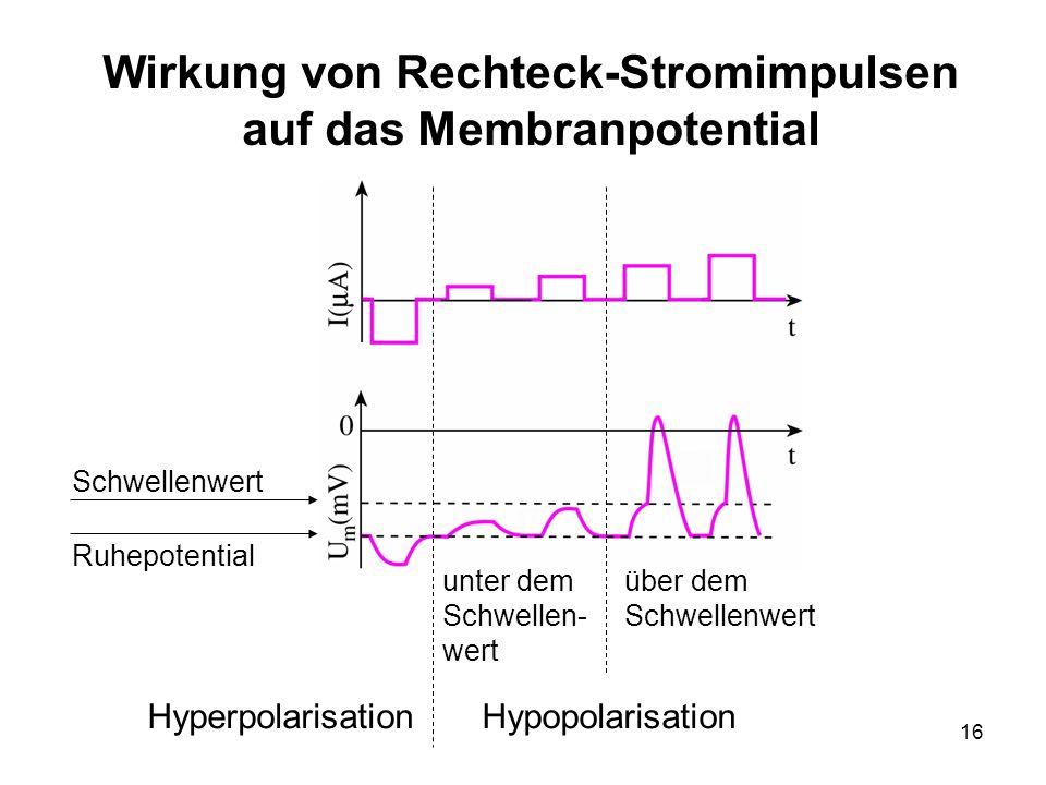 16 Wirkung von Rechteck-Stromimpulsen auf das Membranpotential Schwellenwert Ruhepotential HyperpolarisationHypopolarisation über dem Schwellenwert un