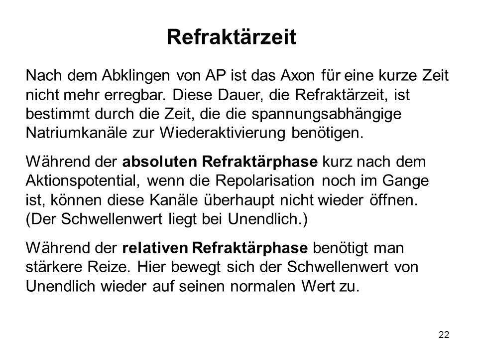 22 Nach dem Abklingen von AP ist das Axon für eine kurze Zeit nicht mehr erregbar. Diese Dauer, die Refraktärzeit, ist bestimmt durch die Zeit, die di