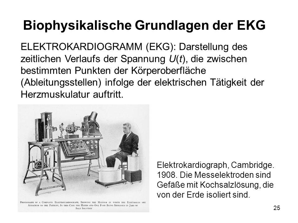 25 ELEKTROKARDIOGRAMM (EKG): Darstellung des zeitlichen Verlaufs der Spannung U(t), die zwischen bestimmten Punkten der Körperoberfläche (Ableitungsst