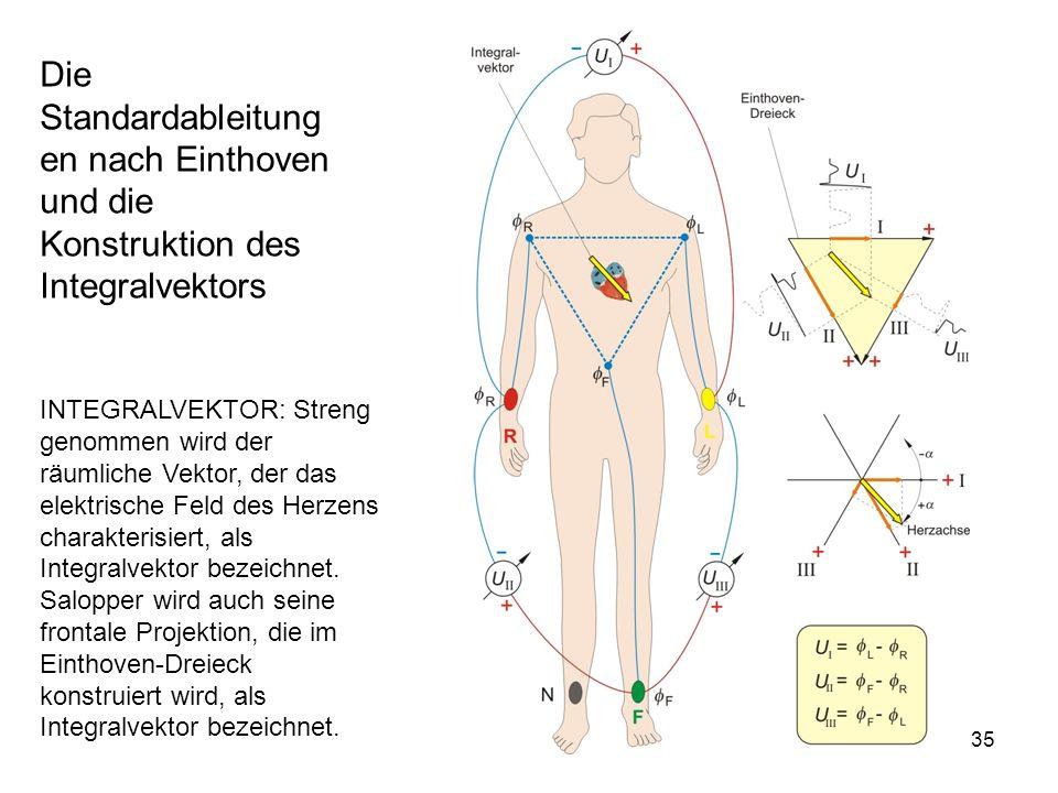 35 Die Standardableitung en nach Einthoven und die Konstruktion des Integralvektors INTEGRALVEKTOR: Streng genommen wird der räumliche Vektor, der das