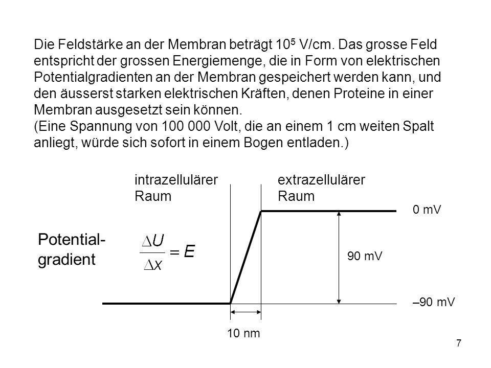 7 Die Feldstärke an der Membran beträgt 10 5 V/cm. Das grosse Feld entspricht der grossen Energiemenge, die in Form von elektrischen Potentialgradient