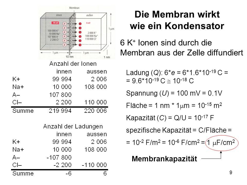 9 Die Membran wirkt wie ein Kondensator Ladung (Q): 6*e = 6*1.6*10 -19 C = = 9.6*10 -19 C 10 -18 C Spannung (U) = 100 mV = 0.1V Fläche = 1 nm * 1 m =