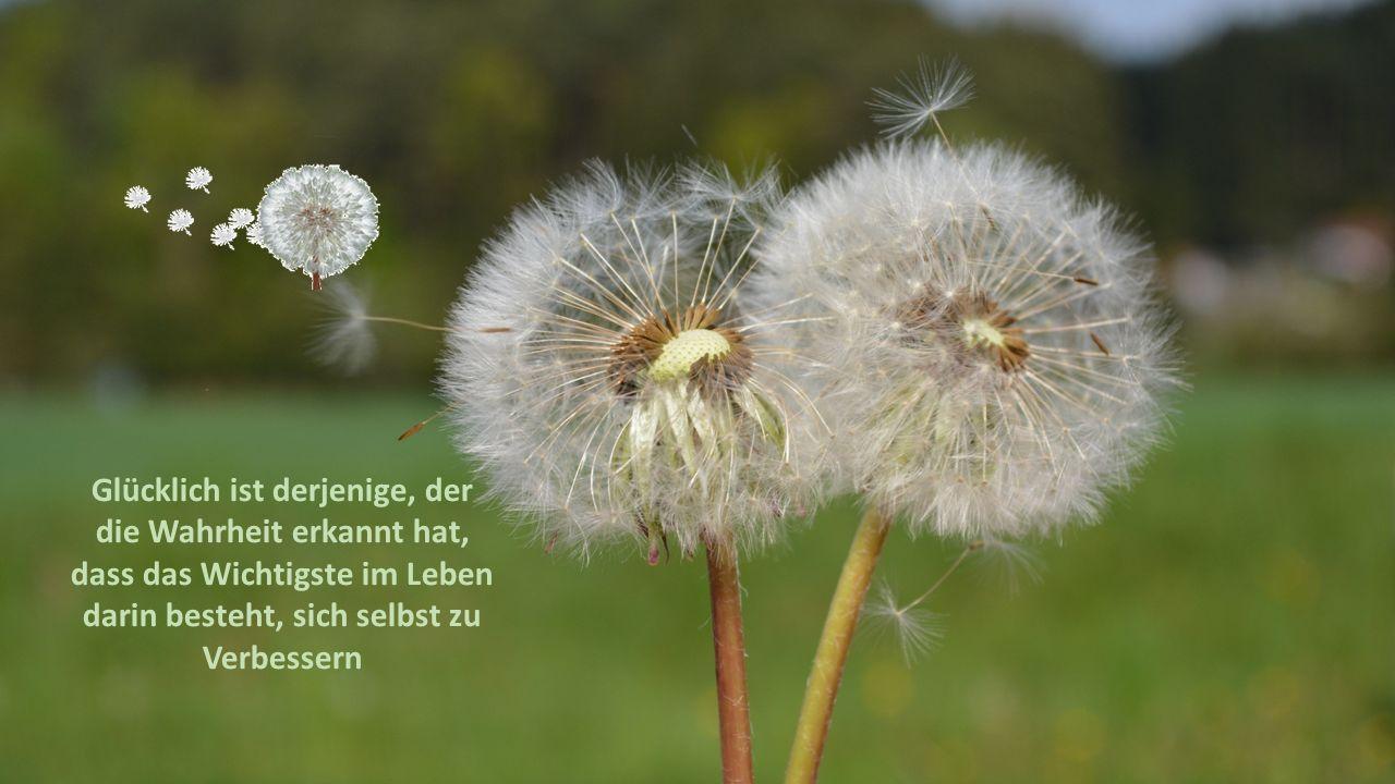 Glücklich ist derjenige, der die Wahrheit erkannt hat, dass das Wichtigste im Leben darin besteht, sich selbst zu Verbessern