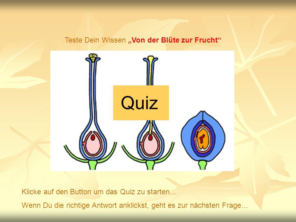 Quiz Teste Dein Wissen Von der Blüte zur Frucht Klicke auf den Button um das Quiz zu starten… Wenn Du die richtige Antwort anklickst, geht es zur nächsten Frage…