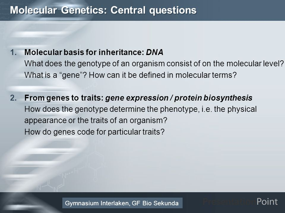 Here comes your footer Page 12 Molecular Genetics: Central questions 1.Molecular basis for inheritance: DNA What does the genotype of an organism cons