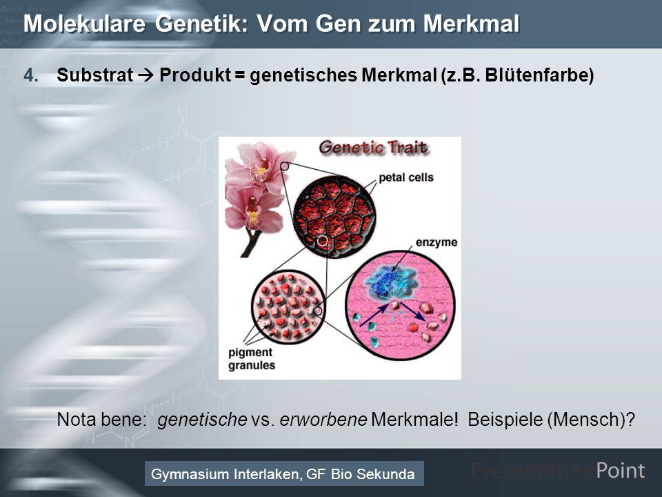 Here comes your footer Page 15 Molekulare Genetik: Vom Gen zum Merkmal 4.Substrat Produkt = genetisches Merkmal (z.B.