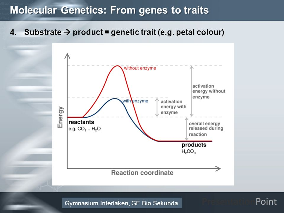 Here comes your footer Page 19 Molecular Genetics: From genes to traits 4. Substrate product = genetic trait (e.g. petal colour) Gymnasium Interlaken,