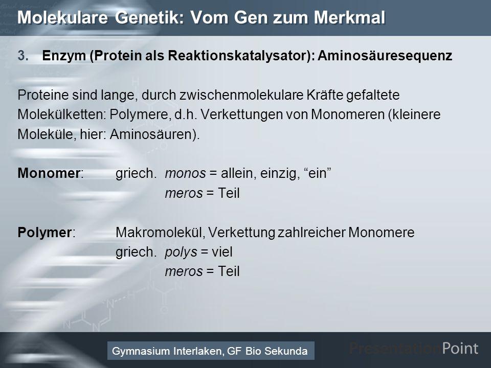 Here comes your footer Page 22 Molekulare Genetik: Vom Gen zum Merkmal 3.Enzym (Protein als Reaktionskatalysator): Aminosäuresequenz Proteine sind lange, durch zwischenmolekulare Kräfte gefaltete Molekülketten: Polymere, d.h.