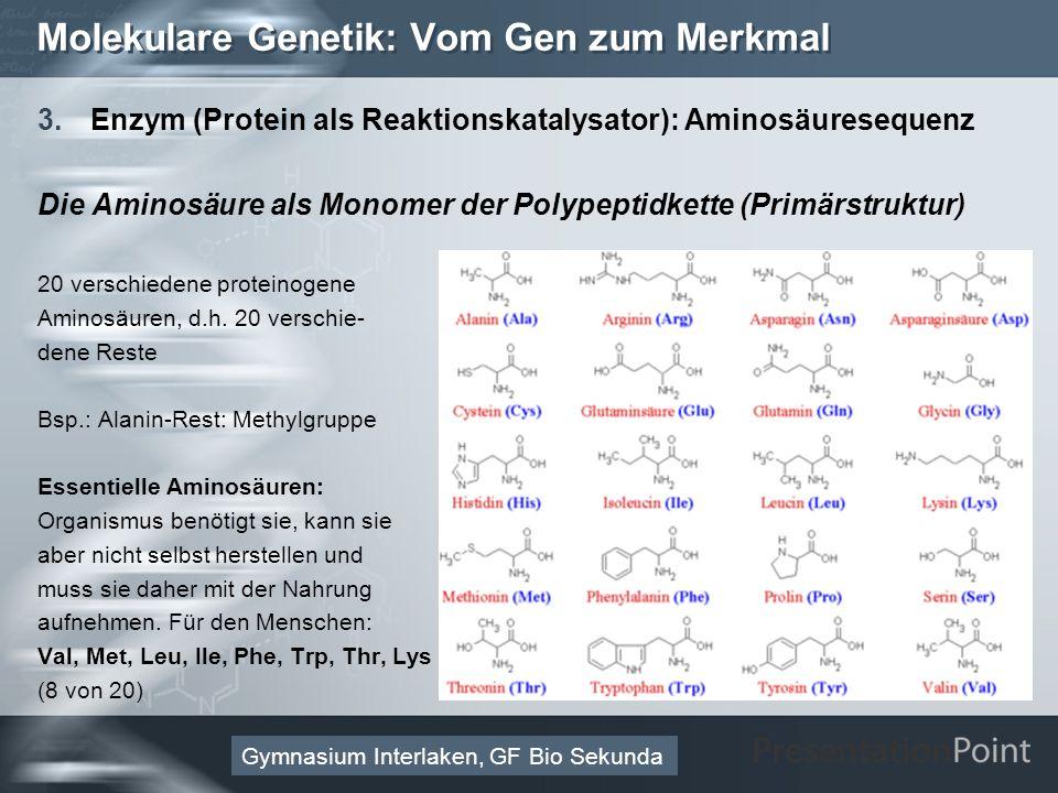 Here comes your footer Page 26 Molekulare Genetik: Vom Gen zum Merkmal 3.Enzym (Protein als Reaktionskatalysator): Aminosäuresequenz Die Aminosäure als Monomer der Polypeptidkette (Primärstruktur) 20 verschiedene proteinogene Aminosäuren, d.h.