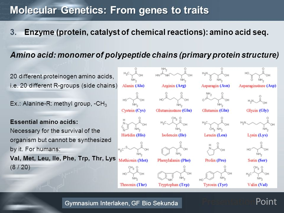 Here comes your footer Page 27 Molecular Genetics: From genes to traits 3.Enzyme (protein, catalyst of chemical reactions): amino acid seq. Amino acid