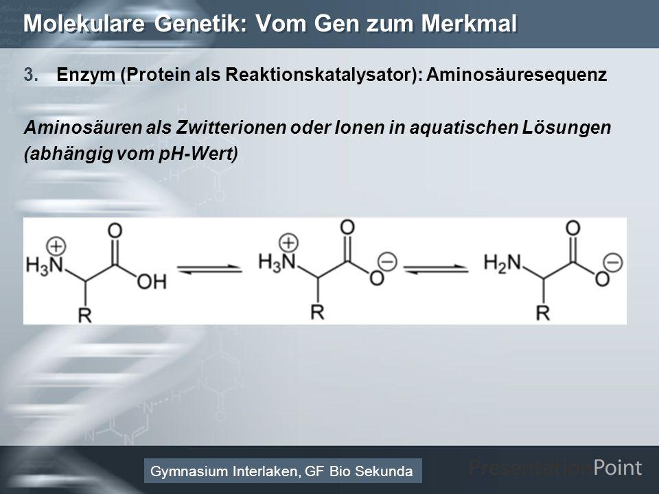 Here comes your footer Page 28 Molekulare Genetik: Vom Gen zum Merkmal 3.Enzym (Protein als Reaktionskatalysator): Aminosäuresequenz Aminosäuren als Zwitterionen oder Ionen in aquatischen Lösungen (abhängig vom pH-Wert) Gymnasium Interlaken, GF Bio Sekunda