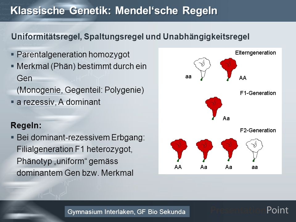 Here comes your footer Page 24 Molekulare Genetik: Vom Gen zum Merkmal 3.Enzym (Protein als Reaktionskatalysator): Aminosäuresequenz Die Aminosäure als Monomer der Polypeptidkette (Primärstruktur) -Zentrales C-Atom -2 funktionelle Gruppen: Aminogruppe (-NH 2 ), Carboxylgruppe (-COOH) -Rest: definiert Aminosäure; 20 Reste für 20 (kanonische/proteinogene) Aminosäuren Gymnasium Interlaken, GF Bio Sekunda