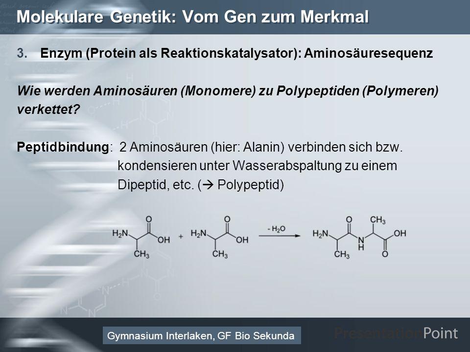 Here comes your footer Page 30 Molekulare Genetik: Vom Gen zum Merkmal 3.Enzym (Protein als Reaktionskatalysator): Aminosäuresequenz Wie werden Aminosäuren (Monomere) zu Polypeptiden (Polymeren) verkettet.