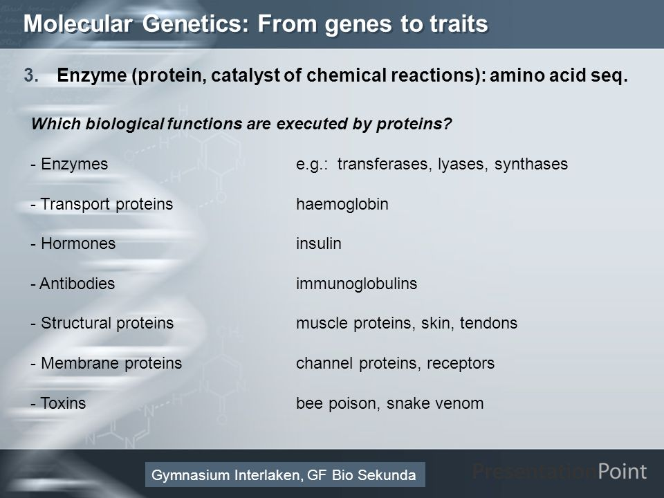 Here comes your footer Page 39 Molecular Genetics: From genes to traits 3.Enzyme (protein, catalyst of chemical reactions): amino acid seq. Gymnasium