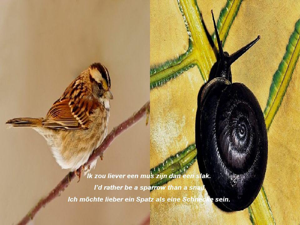 Ik zou liever een mus zijn dan een slak.Id rather be a sparrow than a snail.