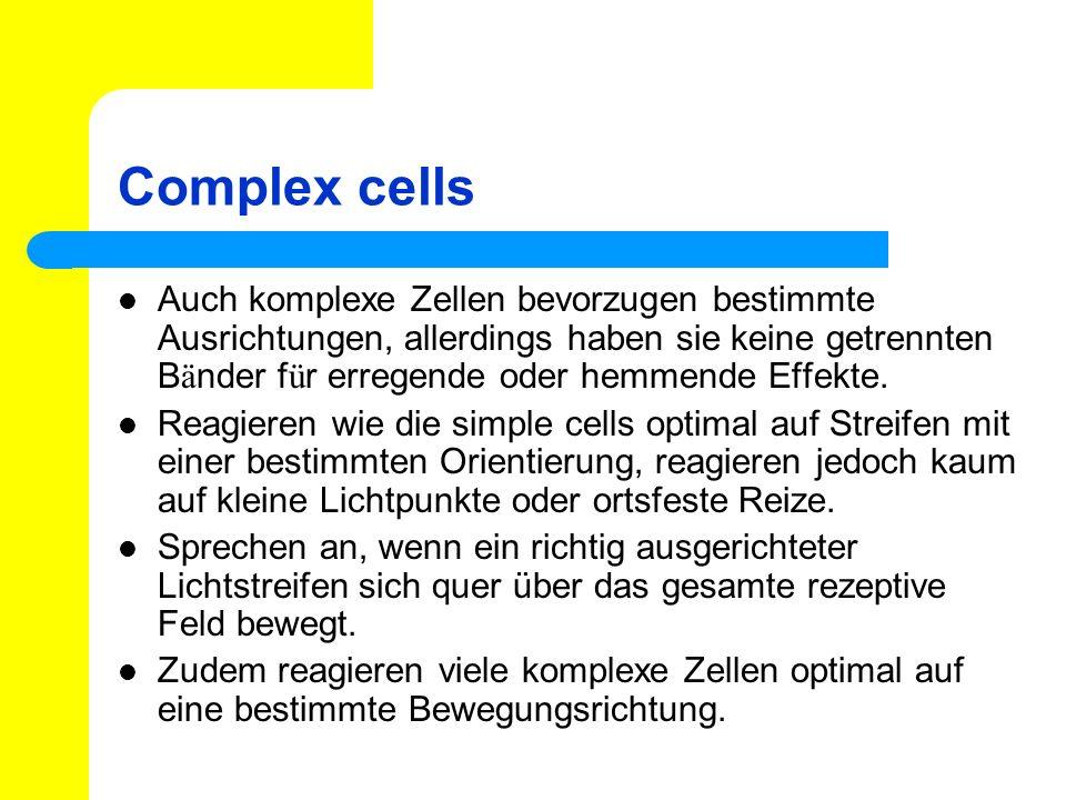 Complex cells Auch komplexe Zellen bevorzugen bestimmte Ausrichtungen, allerdings haben sie keine getrennten B ä nder f ü r erregende oder hemmende Ef