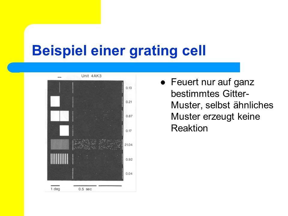 Beispiel einer grating cell Feuert nur auf ganz bestimmtes Gitter- Muster, selbst ähnliches Muster erzeugt keine Reaktion