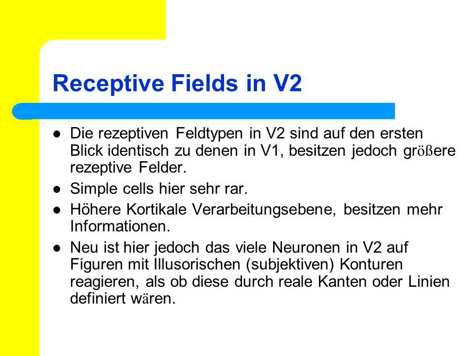 Receptive Fields in V2 Die rezeptiven Feldtypen in V2 sind auf den ersten Blick identisch zu denen in V1, besitzen jedoch gr öß ere rezeptive Felder.