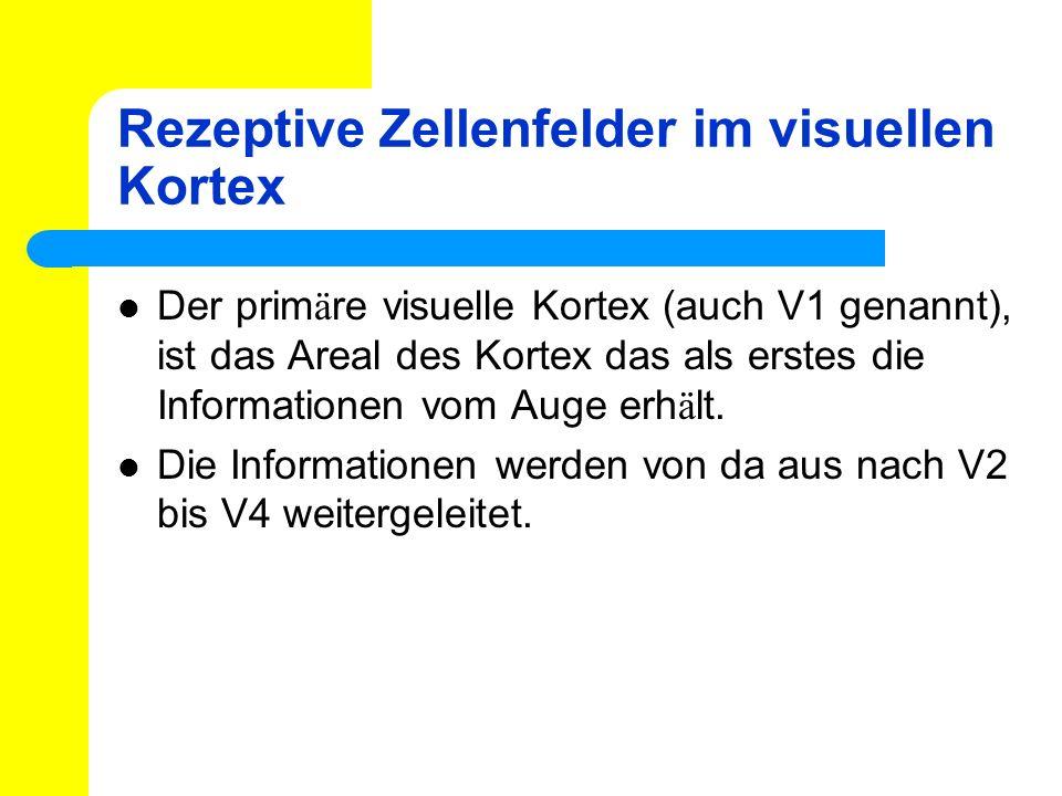 Rezeptive Zellenfelder im visuellen Kortex Der prim ä re visuelle Kortex (auch V1 genannt), ist das Areal des Kortex das als erstes die Informationen