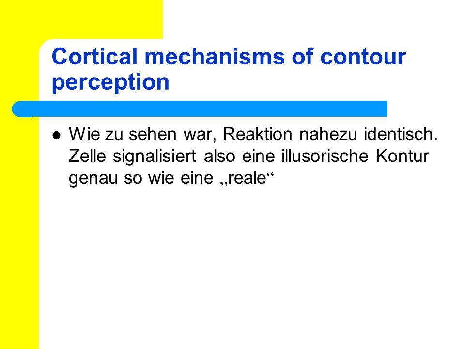Cortical mechanisms of contour perception Wie zu sehen war, Reaktion nahezu identisch. Zelle signalisiert also eine illusorische Kontur genau so wie e