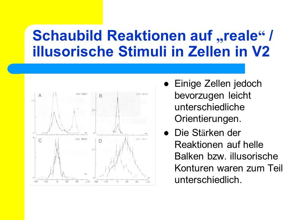 Schaubild Reaktionen auf reale / illusorische Stimuli in Zellen in V2 Einige Zellen jedoch bevorzugen leicht unterschiedliche Orientierungen. Die St ä