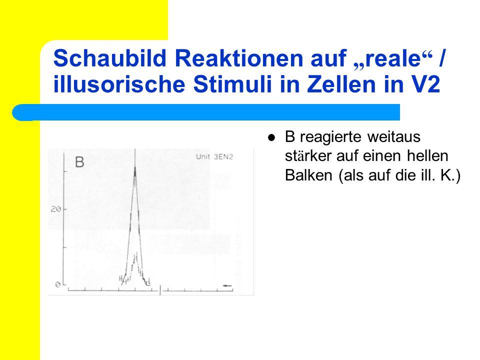 Schaubild Reaktionen auf reale / illusorische Stimuli in Zellen in V2 B reagierte weitaus st ä rker auf einen hellen Balken (als auf die ill. K.)