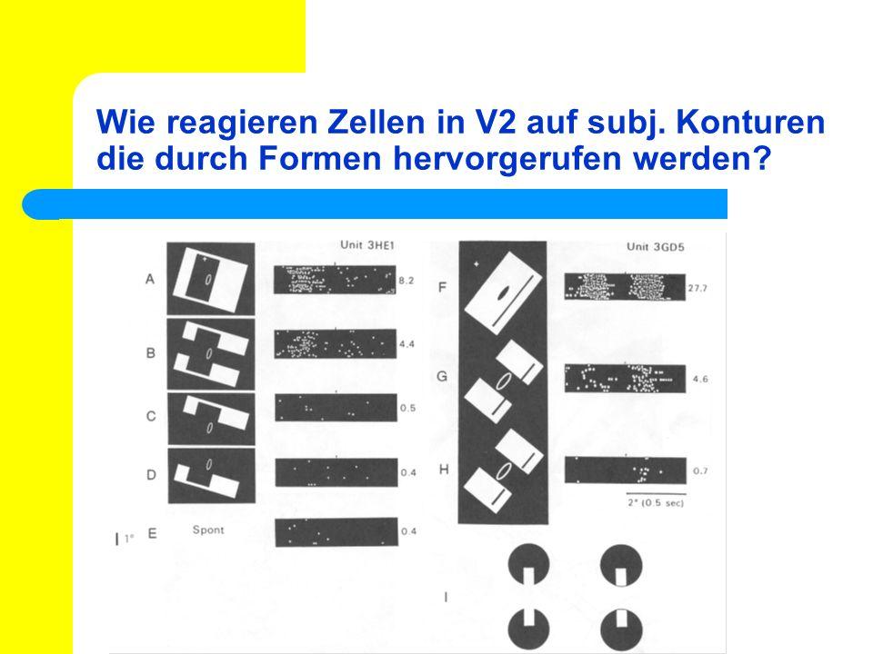 Wie reagieren Zellen in V2 auf subj. Konturen die durch Formen hervorgerufen werden?