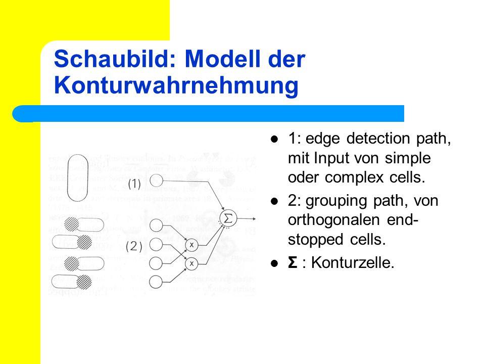 Schaubild: Modell der Konturwahrnehmung 1: edge detection path, mit Input von simple oder complex cells. 2: grouping path, von orthogonalen end- stopp