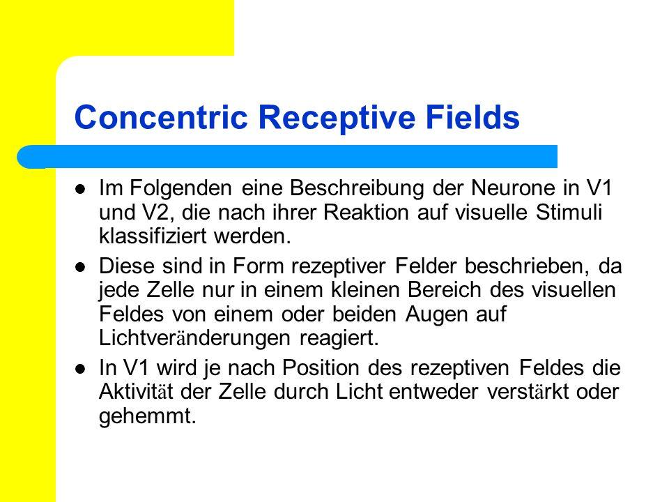 Concentric Receptive Fields Im Folgenden eine Beschreibung der Neurone in V1 und V2, die nach ihrer Reaktion auf visuelle Stimuli klassifiziert werden