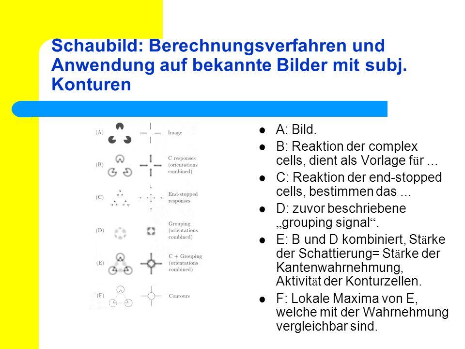 Schaubild: Berechnungsverfahren und Anwendung auf bekannte Bilder mit subj. Konturen A: Bild. B: Reaktion der complex cells, dient als Vorlage f ü r..