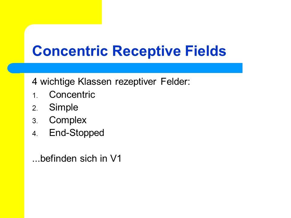Concentric Receptive Fields 4 wichtige Klassen rezeptiver Felder: 1. Concentric 2. Simple 3. Complex 4. End-Stopped...befinden sich in V1