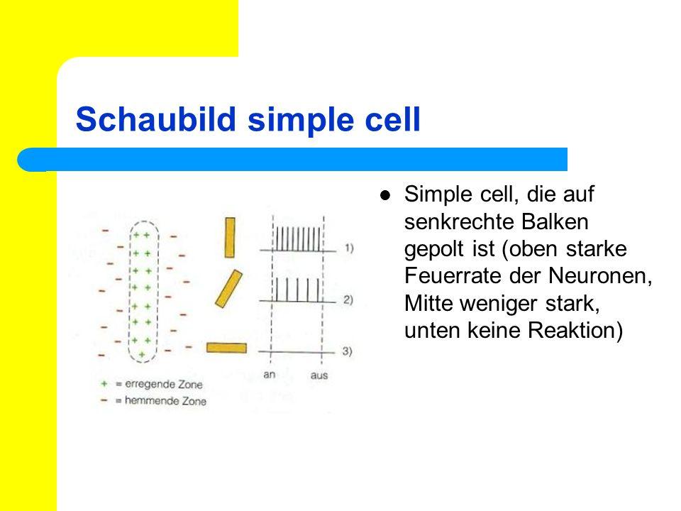 Schaubild simple cell Simple cell, die auf senkrechte Balken gepolt ist (oben starke Feuerrate der Neuronen, Mitte weniger stark, unten keine Reaktion