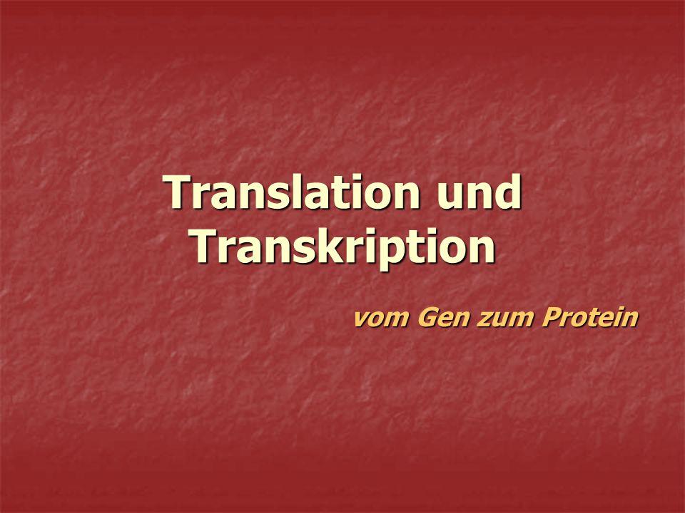 Translation und Transkription vom Gen zum Protein