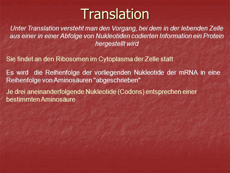 Translation Unter Translation versteht man den Vorgang, bei dem in der lebenden Zelle aus einer in einer Abfolge von Nukleotiden codierten Information ein Protein hergestellt wird Sie findet an den Ribosomen im Cytoplasma der Zelle statt Es wird die Reihenfolge der vorliegenden Nukleotide der mRNA in eine Reihenfolge von Aminosäuren abgeschrieben .