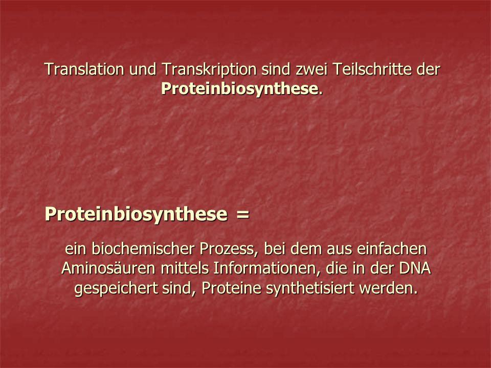 Translation und Transkription sind zwei Teilschritte der Proteinbiosynthese.