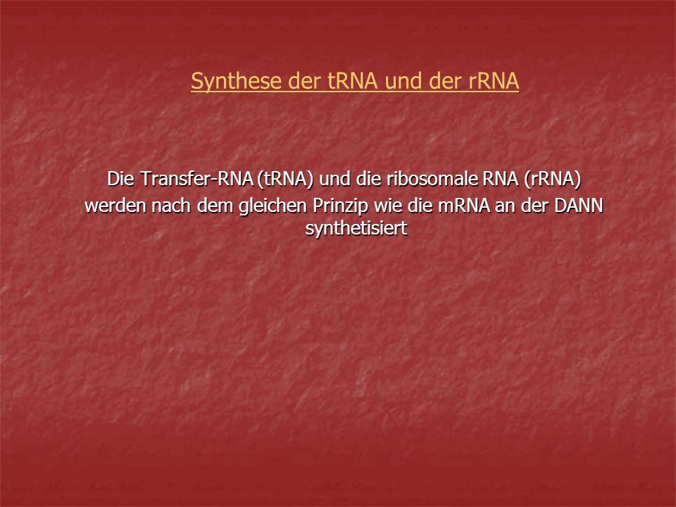 Synthese der tRNA und der rRNA Die Transfer-RNA (tRNA) und die ribosomale RNA (rRNA) werden nach dem gleichen Prinzip wie die mRNA an der DANN synthetisiert