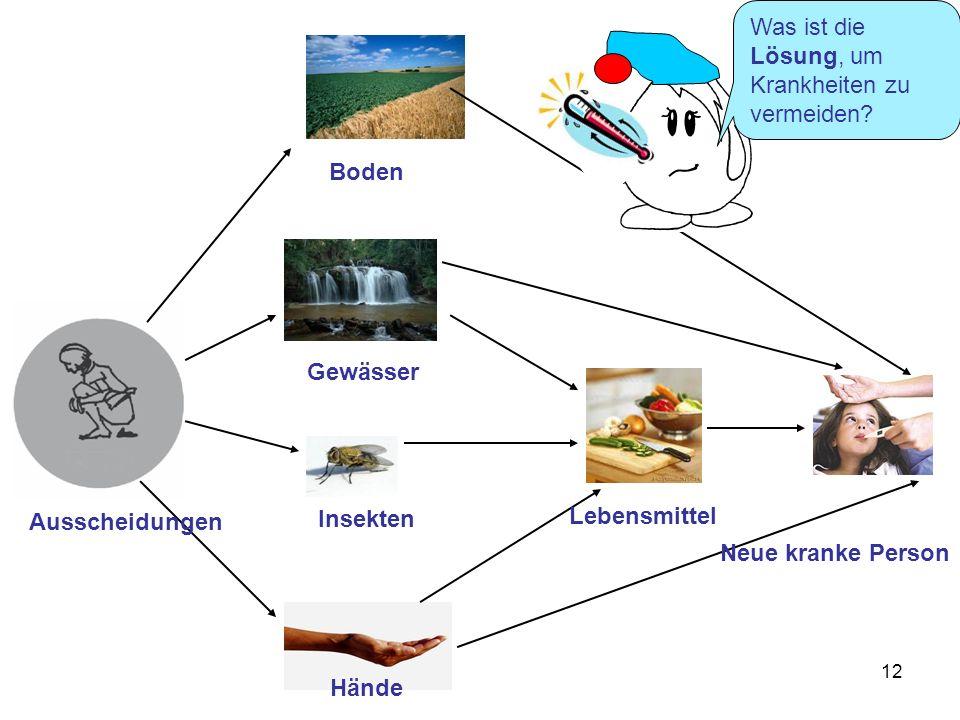 12 Ausscheidungen Boden Gewässer Hände Insekten Neue kranke Person Lebensmittel Was ist die Lösung, um Krankheiten zu vermeiden?