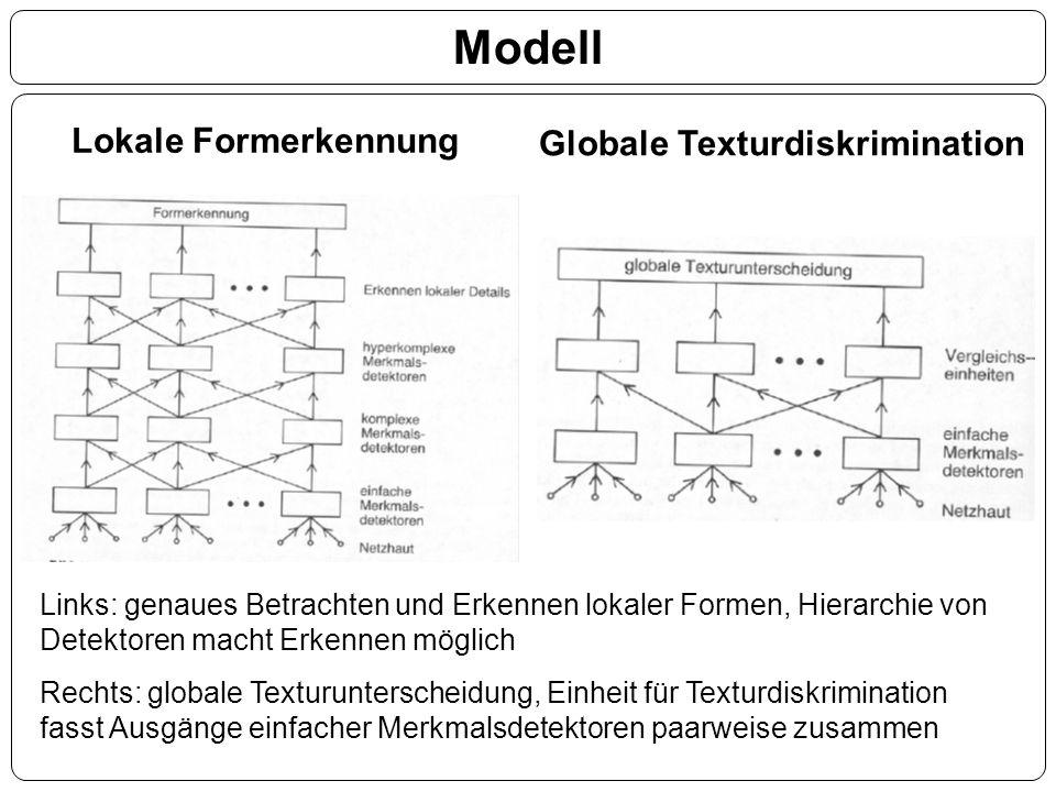Modell Lokale Formerkennung Globale Texturdiskrimination Links: genaues Betrachten und Erkennen lokaler Formen, Hierarchie von Detektoren macht Erkennen möglich Rechts: globale Texturunterscheidung, Einheit für Texturdiskrimination fasst Ausgänge einfacher Merkmalsdetektoren paarweise zusammen