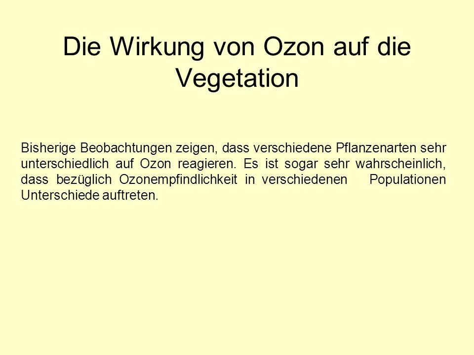 Die Wirkung von Ozon auf die Vegetation Bisherige Beobachtungen zeigen, dass verschiedene Pflanzenarten sehr unterschiedlich auf Ozon reagieren. Es is