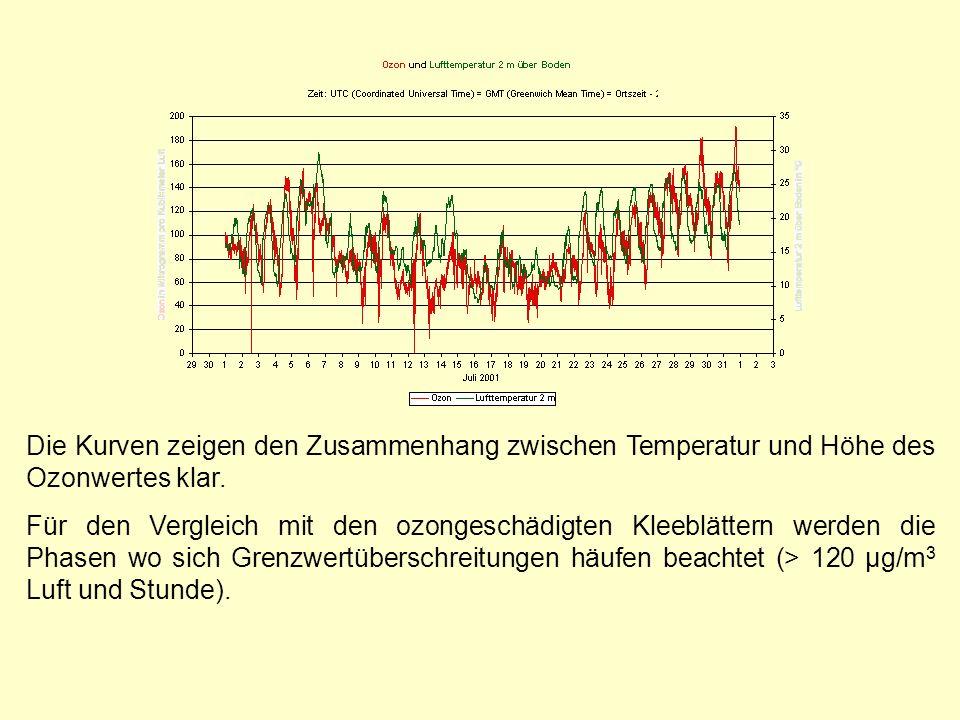 Die Kurven zeigen den Zusammenhang zwischen Temperatur und Höhe des Ozonwertes klar. Für den Vergleich mit den ozongeschädigten Kleeblättern werden di